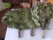 Продаем веники дубовые,  березовые,  кленовые,  липовые