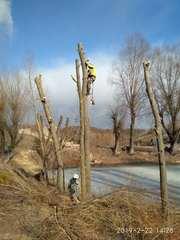 Спиливание деревьев любой сложности,  быстро,  качественно,  недорого