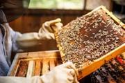 Продам бджолосім