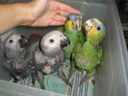 Решились на покупку попугая?